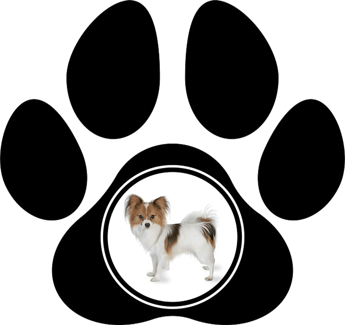 calgary dog grooming services